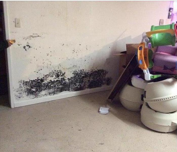 Moldy wall with customers contents in corner.